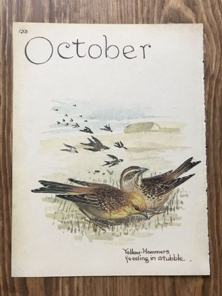 October - Country Diary of an Edwardian Lady - Book Page -